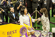 New York, NY - 16 February 2016. Best of Show winner CJ, a German short-haired pointer, poses for photos with one of his owners after the 140th Westminster Kennel Club Dog show in Madison Square Garden.