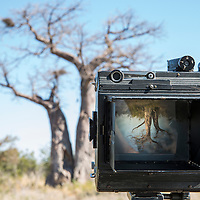 Botswana, Nxai Pan National Park, Blurred view of baobab tree seen through ground glass on Speed Graphic view camera