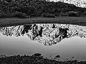 Reflections on the Desert