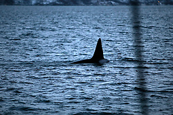 NORWAY TROMSO 5DEC15 - Whale spotting in a fjord near the arctic city of Tromso.<br /> <br /> jre/Photo by Jiri Rezac / Greenpeace<br /> <br /> &copy; Jiri Rezac 2015