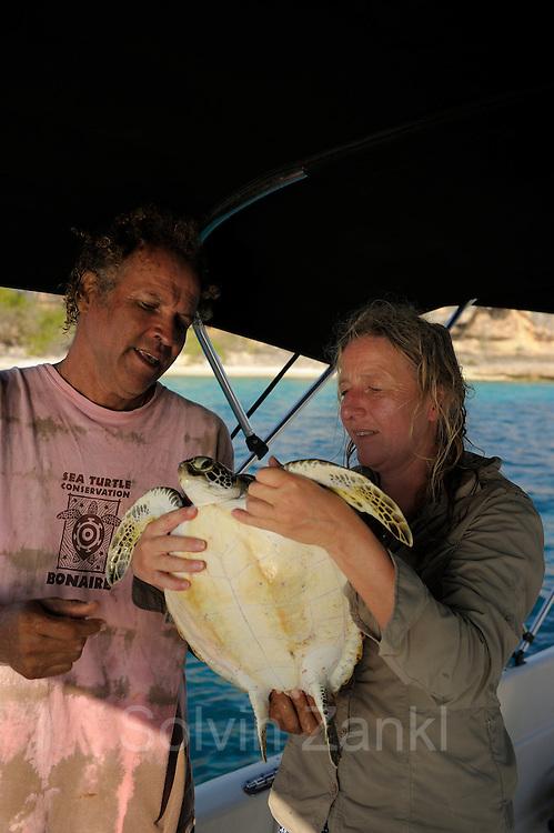GEO Autorin Anke Sparmann entlässt eine Grüne Schildköten nach der Vermessung wieder in den Ozean