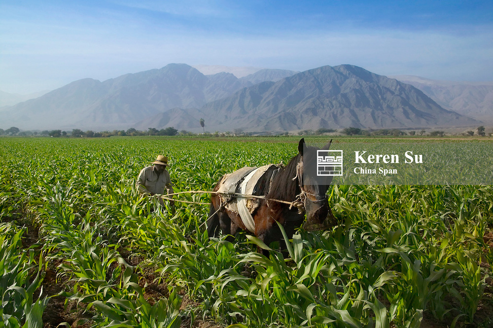 Farmer with donkey in farmland, mountains in the distance, Nazca area, Peru