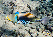 "The state fish of Hawaii is the lagoon triggerfish (humuhumunukunukuapua'a, meaning ""triggerfish with a snout like a pig""; or humuhumu for short). Hanauma Bay Nature Preserve is a popular snorkeling area run by the City and County of Honolulu, in the Hawaii Kai neighborhood, on the island of Oahu, Hawaii, USA. After decades of overcrowding, Hanauma Bay is now better managed as the first Marine Life Conservation District in the State, which attempts to sustain the stressed reef which hosts a great variety of tropical fish. Feeding the fish is no longer allowed and the park is closed on Tuesdays to allow the fish a day of rest undisturbed. Hanauma Bay formed within the tuff ring of an eroded volcanic crater along the southeast coast of Oahu."
