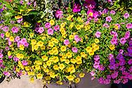 Flowers, Bronxville, NY