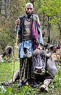 Dhumman and his favorite buffalo.