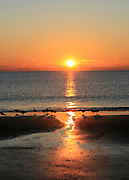 Jekyll Island beach sunrise with seagulls