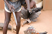 A Ghanaian Concoction Man beheads a chicken to determine whether a child (usually with a disability) is a spirit child. These predictions are made through various rituals which, include; the use of sacrificial goats, the fresh blood of chickens, observing the behaviour of the beheaded chicken and various ritualistic instruments and objects.