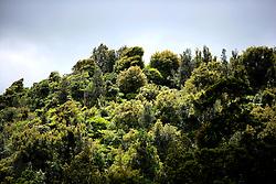 NEW ZEALAND RAGLAN 15DEC07 - Trees and foliage near Bridal Veil Falls, west coast of northern island, New Zealand...jre/Photo by Jiri Rezac..© Jiri Rezac 2007..Contact: +44 (0) 7050 110 417.Mobile:  +44 (0) 7801 337 683.Office:  +44 (0) 20 8968 9635..Email:   jiri@jirirezac.com.Web:    www.jirirezac.com..© All images Jiri Rezac 2007 - All rights reserved.