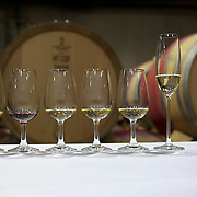 Wine glasses lined up for a group wine tasting session at the cellar door at Cloudy Bay Vineyard, Jackson Road, Marlborough, New Zealand..The winery and vineyards are situated in the Wairau Valley in Marlborough at the northern end of New Zealand's South Island. This unique and cool wine region enjoys a maritime climate with the longest hours of sunshine of any place in New Zealand. Wairau Valley, Marlborough, New Zealand. 9th February 2011. Photo Tim Clayton