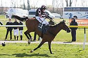 AZZURI (11) ridden by Harry Skelton and trained by Dan Skelton winning The Class 1 Listed Scotty Brand Handicap Steeplechase over 2m (£40,000) during the Scottish Grand National race day at Ayr Racecourse, Ayr, Scotland on 13 April 2019.