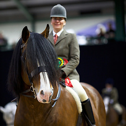 SHS SS 2018  British Ridden Heavy Horse  HOYS