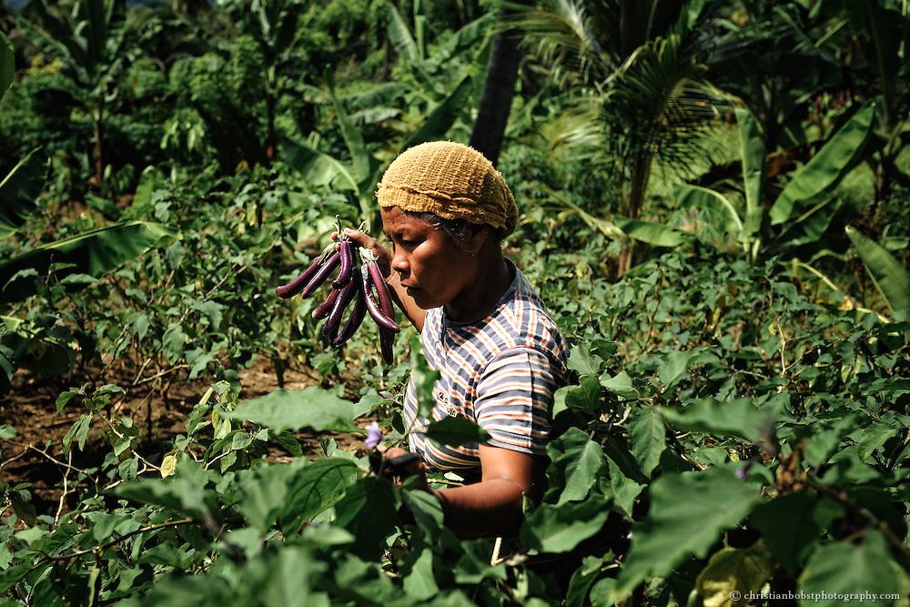 Die Diversifizierung der Produktion ermöglicht ein sicheres Einkommen. So kann Alma auf dem Markt Auberginen verkaufen.