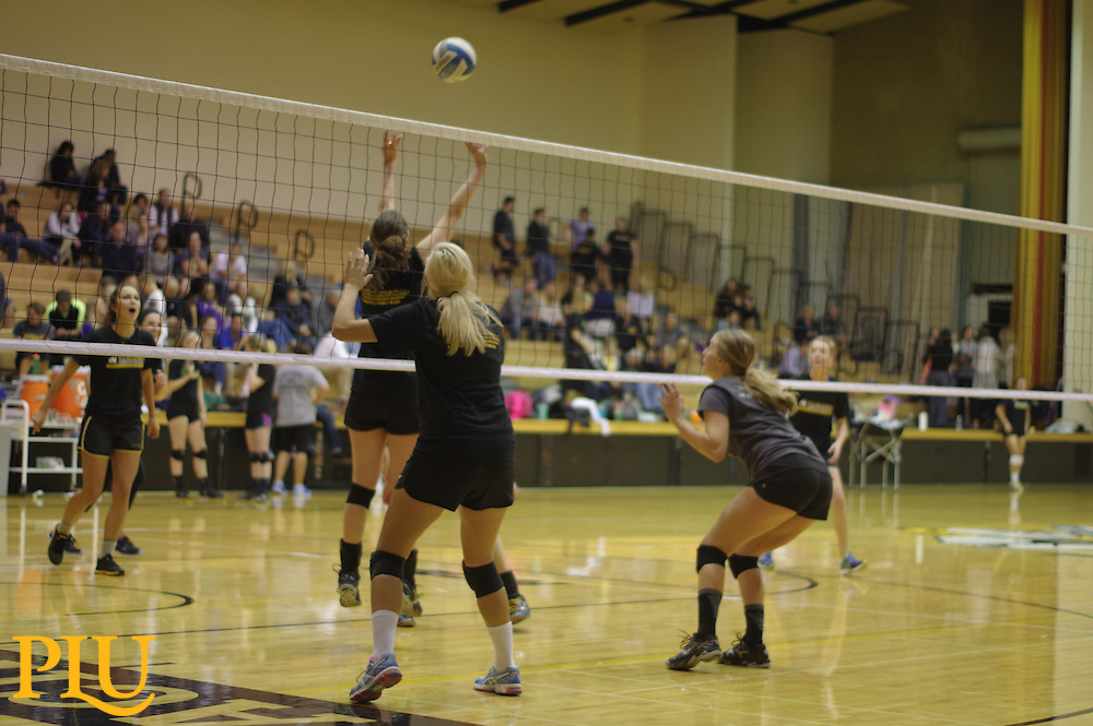 Homecoming Alumni Volleyball Games at PLU on Saturday, October 10, 2015. (Photo/Angelo Mejia '17)