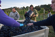 2017  harvest, Bethel Heights, Eola-Amity AVA, Willamette Valley, Oregon
