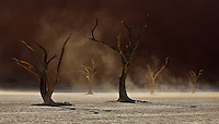 A one of a kind moment in Namibia's world famous Deadvlei as dust, blown up by strong winds, and illuminated by the morning sun, forms a stunning backdrop to the graceful dead trees which populate this unique part of the world.