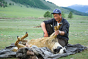 The slaughtering of a sheep for the evening meal, Tsagaan nuur, Mongolia