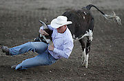061408-Evergreen, CO-steerwrestling-Tony Larsen digs in to flip a steer calf during the steer wrestling competition Saturday, June 14, 2008 at the Evergreen Rodeo Grounds..Photo By Matthew Jonas/Evergreen Newspapers/Photo Editor