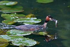 20050517 NED: Vogels in Opbuuren Nederland, Maarssen
