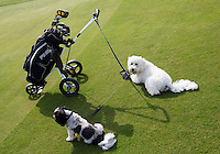 SANDWICH (GB) - Honden op de golfbaan. The Prince's Golf Club. Lined Dogs allowed . COPYRIGHT KOEN SUYK