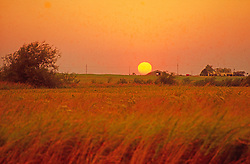 Wheat Field Sunset Agriculture