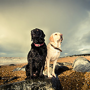 Alfie and Digby