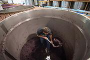 Crush at Cristom winery, Eola-Amity Hills AVA, Willamette Valley, Oregon