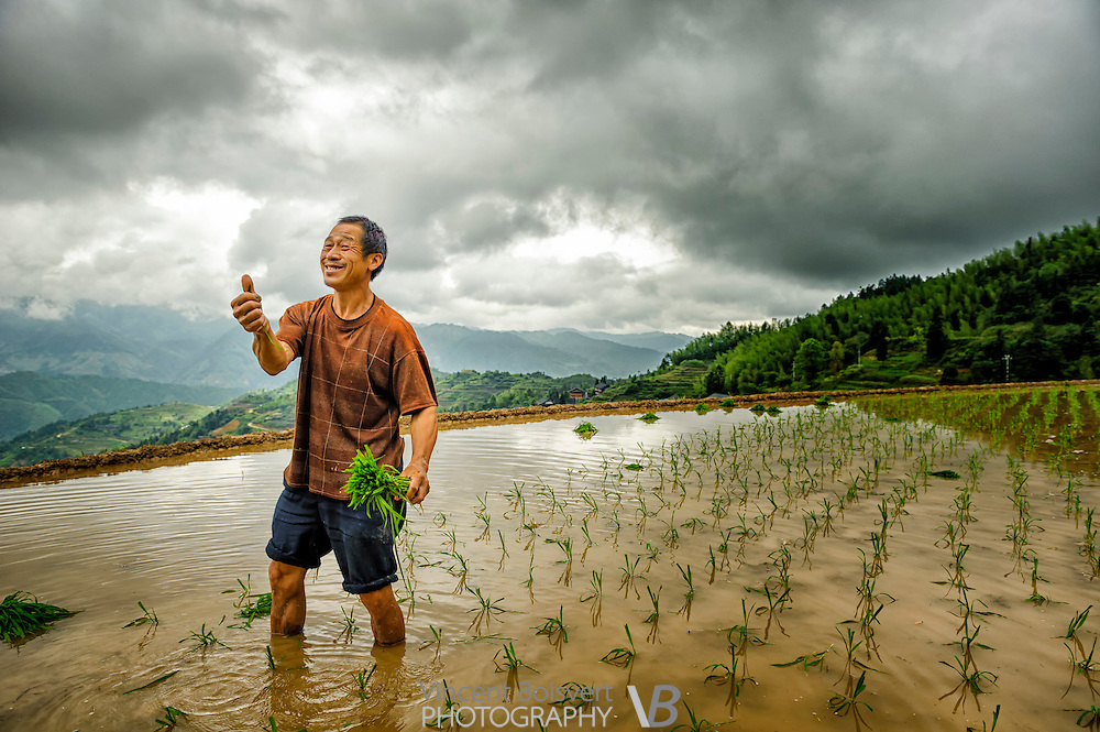 a man hand planting rice in the Longji Terraced Fields Scenic Area, Tiantouzhai, Guangxi, China