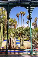 Cactuses in the Majorelle Garden in Marrakech.