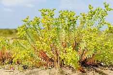 Euphorbiaceae, Wolfsmelkfamilie