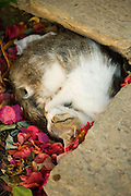 Cat asleep in a pile of colorful leaves on Hydra, Greece.