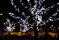Close up of Illuminated Tree at Night