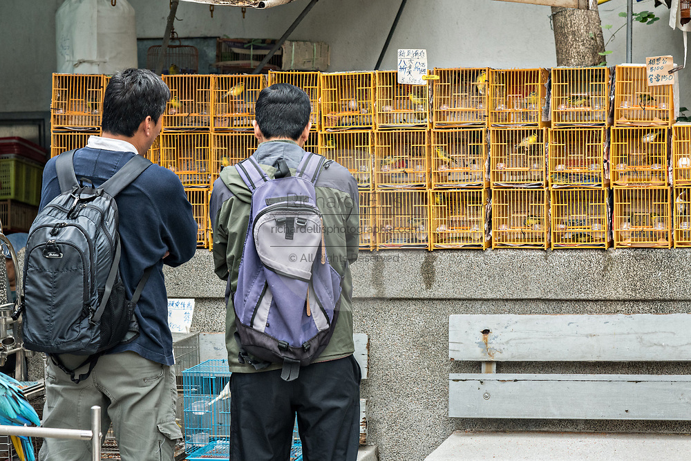 Chinese men shop for songbirds in traditional bamboo cages on sale at the Yuen Po Street Bird Garden in Mong Kok, Kowloon, Hong Kong.