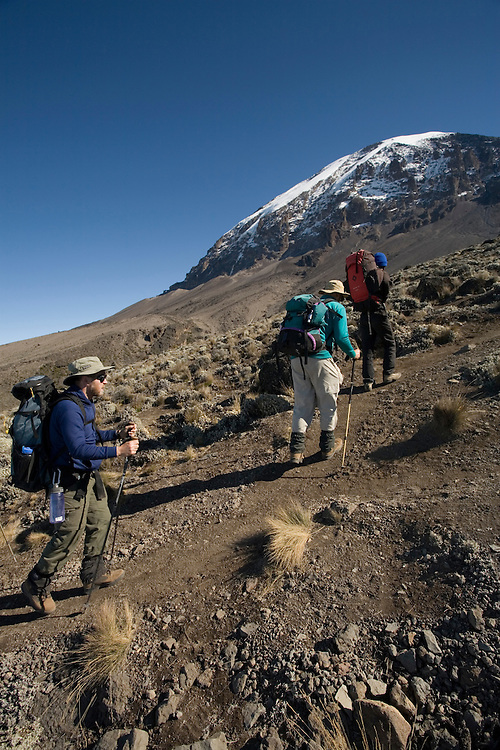 Africa, Tanzania, Kilimanjaro National Park, (MR) Climbing party hikes up trail from Karanga Camp (13000') to Barafu Camp (15100') in early morning sun