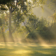 &quot;Beautiful Morning Light'<br />
