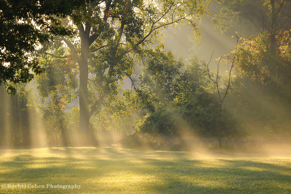 &quot;Beautiful Morning Light'<br /> Wonderful golden rays of light stream through the trees on a late summer morning!!