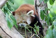 May 18, 2013: Oklahoma City Zoo