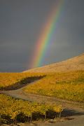 Rainbow over golden vineyards, Red Mountain AVA, central, Washington