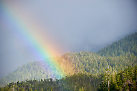 Rainbow over forest during sudden storm,  Nr. Port Alberni , British Columbia, Canada
