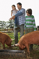 Father and children (5-9) watching pigs feed in sty