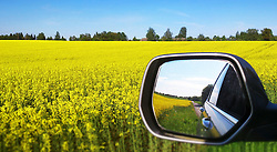 Car mirror by yellow rapefield in Estonia. Canola, reflection.