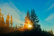 Boreal forest in fog st sunrise with sunburst.<br />