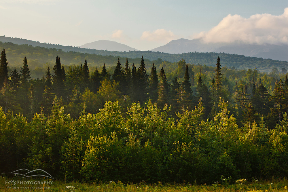 View os New Hampshire's White Mountains in the Randolph Community Forest.