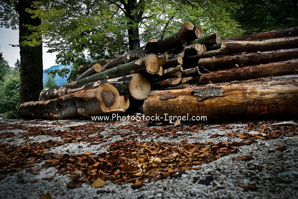 Logging industry - logs collected in a forest