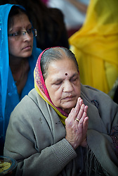 "© under license to London News pictures.  06/11/2010.An elderly woman praying during Celebrations for Diwali, the Hindu new year, at Gokul Centre for Cow Protection and Working Oxen in Aldenham near Watford, Hertfordshire today (Sat). The centre, which was originally donated by George Harrison, is unique in the western world producing ""Ahimsa Milk"" at a cost of £3 per litre without harm to any living being. The Centre is part of Bhaktivedanta Manor, a Hindu place of worship."