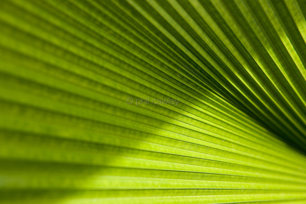 Abstract ribbed leaves