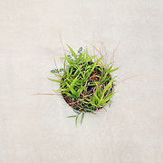 A patch of grass grows in concrete in Wilmington, NC.