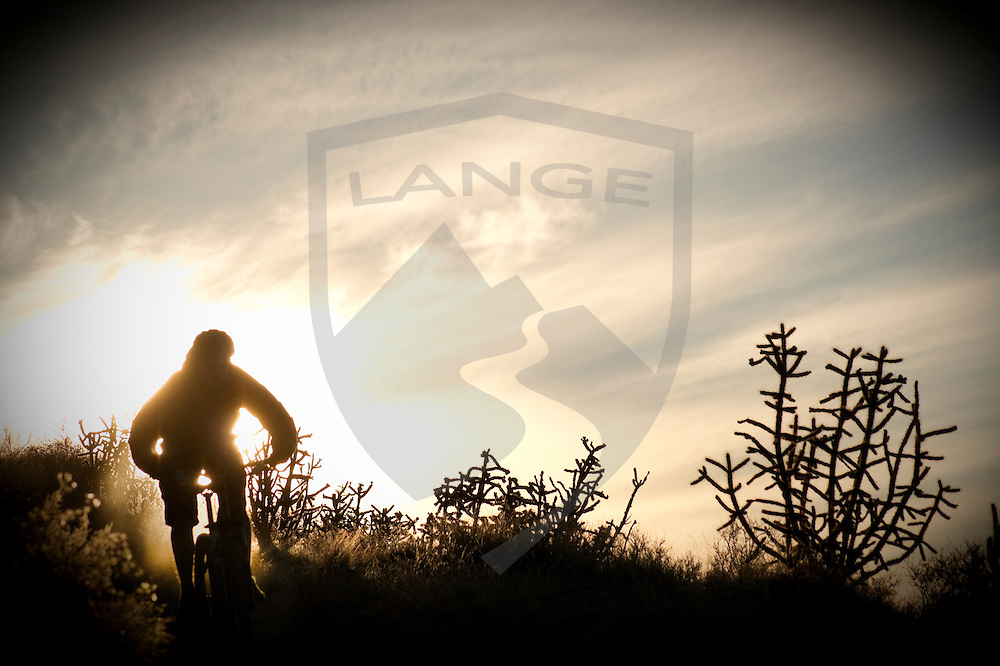 mountain biker silhouetted against the sunset of golden yellow with cholla cactus.  sandia mountains, new mexico.
