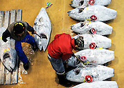 A buyer examines the tuna lined up for auction at Misaki Port fish market, west of Tokyo, Japan