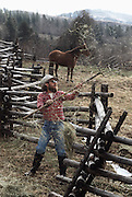 Bob Goodman, a rancher in Halfway, Oregon, lost his arm in a freak accident. Researchers at the University of Utah gave him a myoelectric arm, which he controls by flexing the muscles in his arm that are still intact. Sensors on the inside of the prosthetic arm socket pick up the faint electrical signals from the muscles and amplify them to control the robot arm. In this way, Goodman can do most things as he did before his accident. Here he is using a pitchfork to throw hay over the fence to his horses.