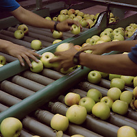 Apple Pickers by Paul Grossmann